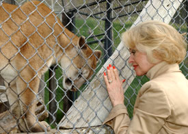 Tippi Hedren with cougar